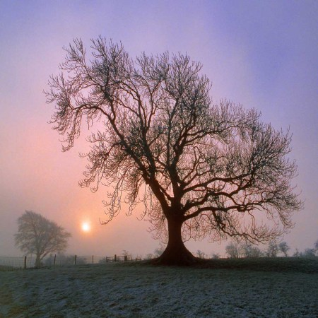 Shop christmas cards northumberland winter simon fraser photo ash tree at sunrise in midwinter south tyne valley m4hsunfo