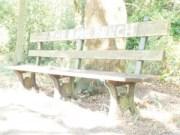 The Epic Bench (+2ev)