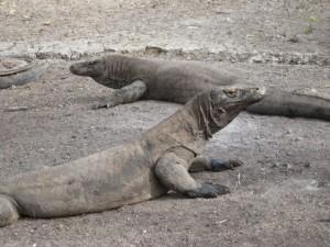 Rinca Island Komodo National Park