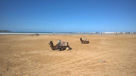Essaouria morocco