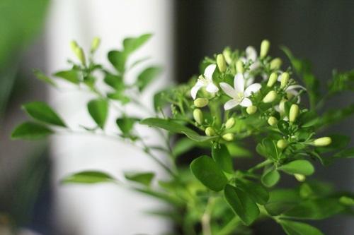 Simpatia das plantas para atrair sorte, abundância e prosperidade