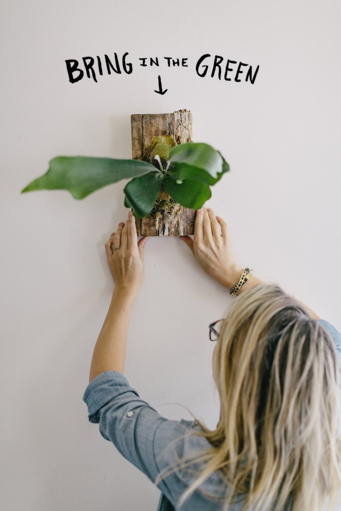 15 Garden DIY Mounting a Staghorn Fern Simphome com