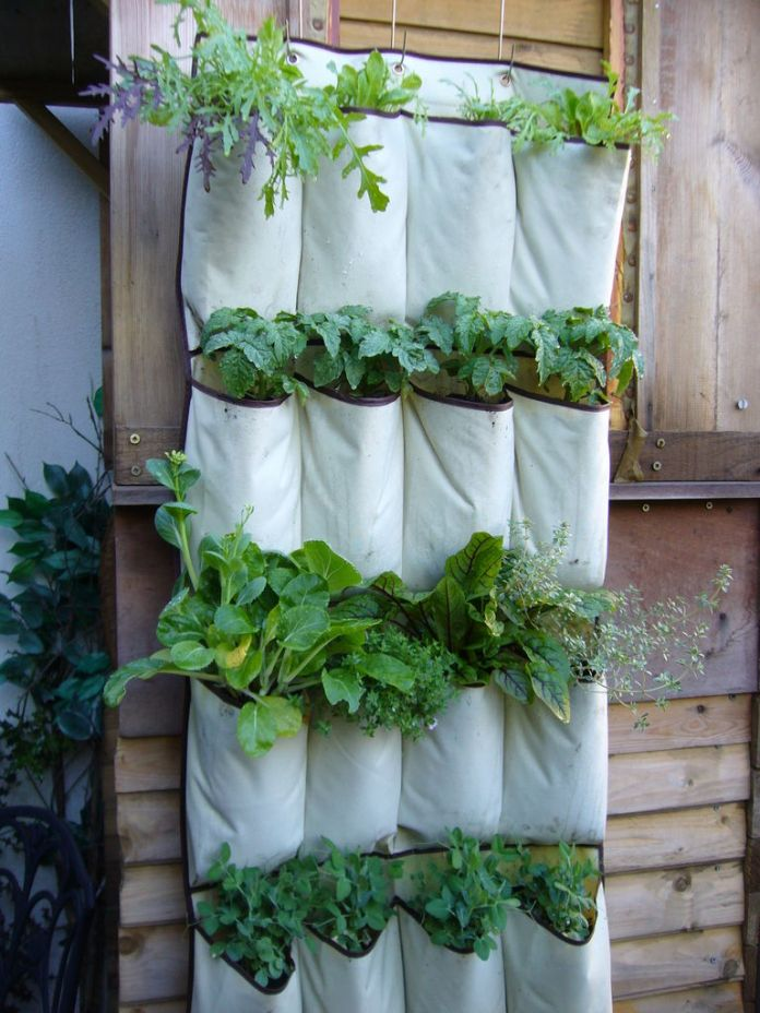 4. Vertical Gardening with Shoe Organizer via Simphome