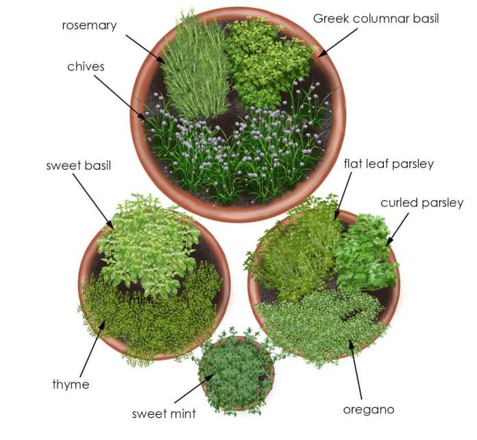 Simphome.com herb garden in containers bonnie plants intended for 10 potted herb garden ideas elegant and stunning