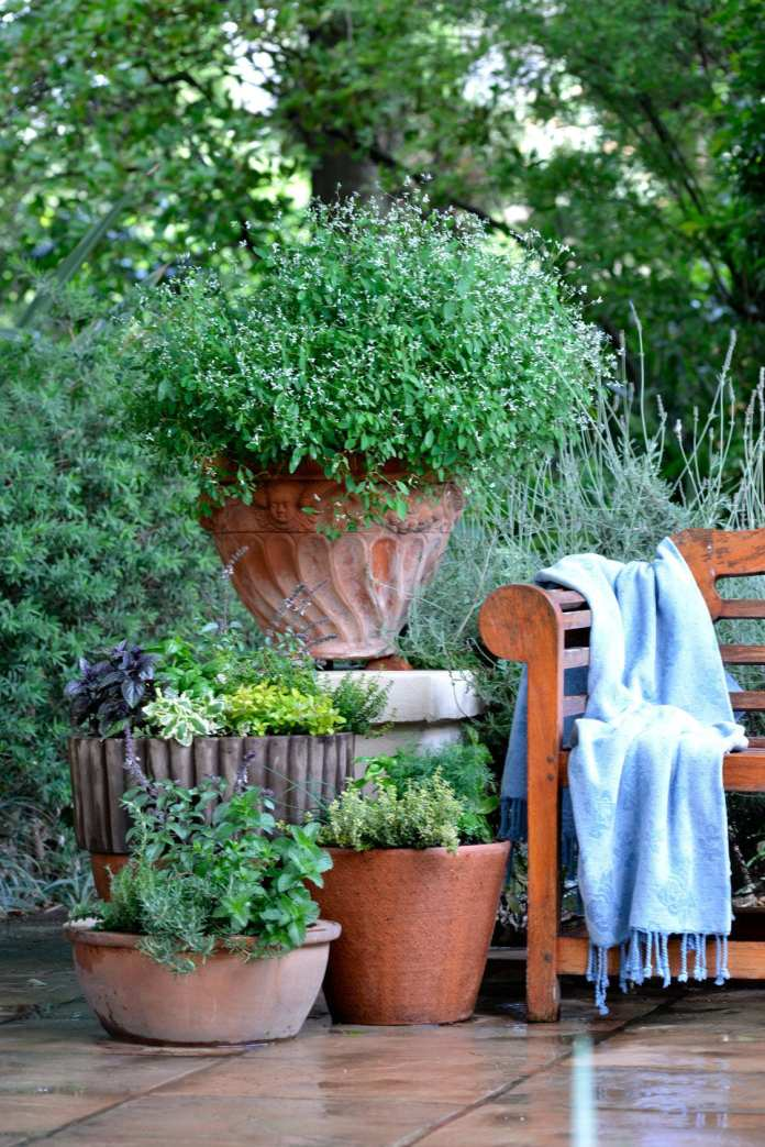 small garden ideas growing herbs in pots gillys garden courtyard in 10 potted herb garden ideas elegant and stunning