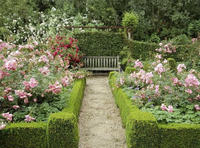 Simphome.com rose garden with wooden bench and boxwood cottage garden garden within rose garden design ideas