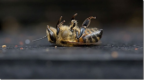 Image result for dying bees