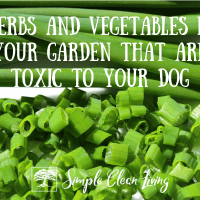 Herbs and Vegetables in Your Garden That are Toxic to Your Dog