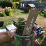 cadeaux invités pas cher succulentes