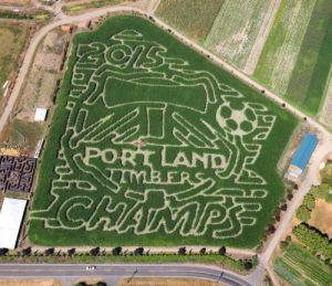 The corn maze at Bella Organic Pumpkin patch in NW Portland