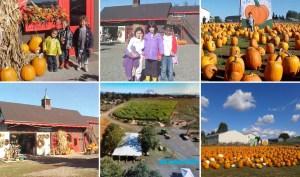 Boring Oregon Pumpkin Patch Liepold Farms
