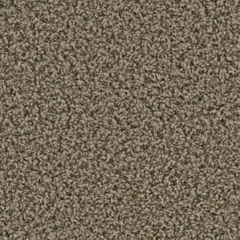 Zion Springdale Carpet by Tas Flooring