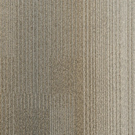 Tas Bandwidth Development Camel Commercial Carpet in Portland