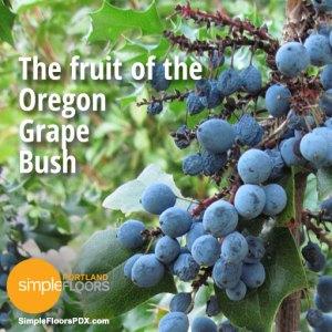 The fruit of the Oregon Grape bush is edible