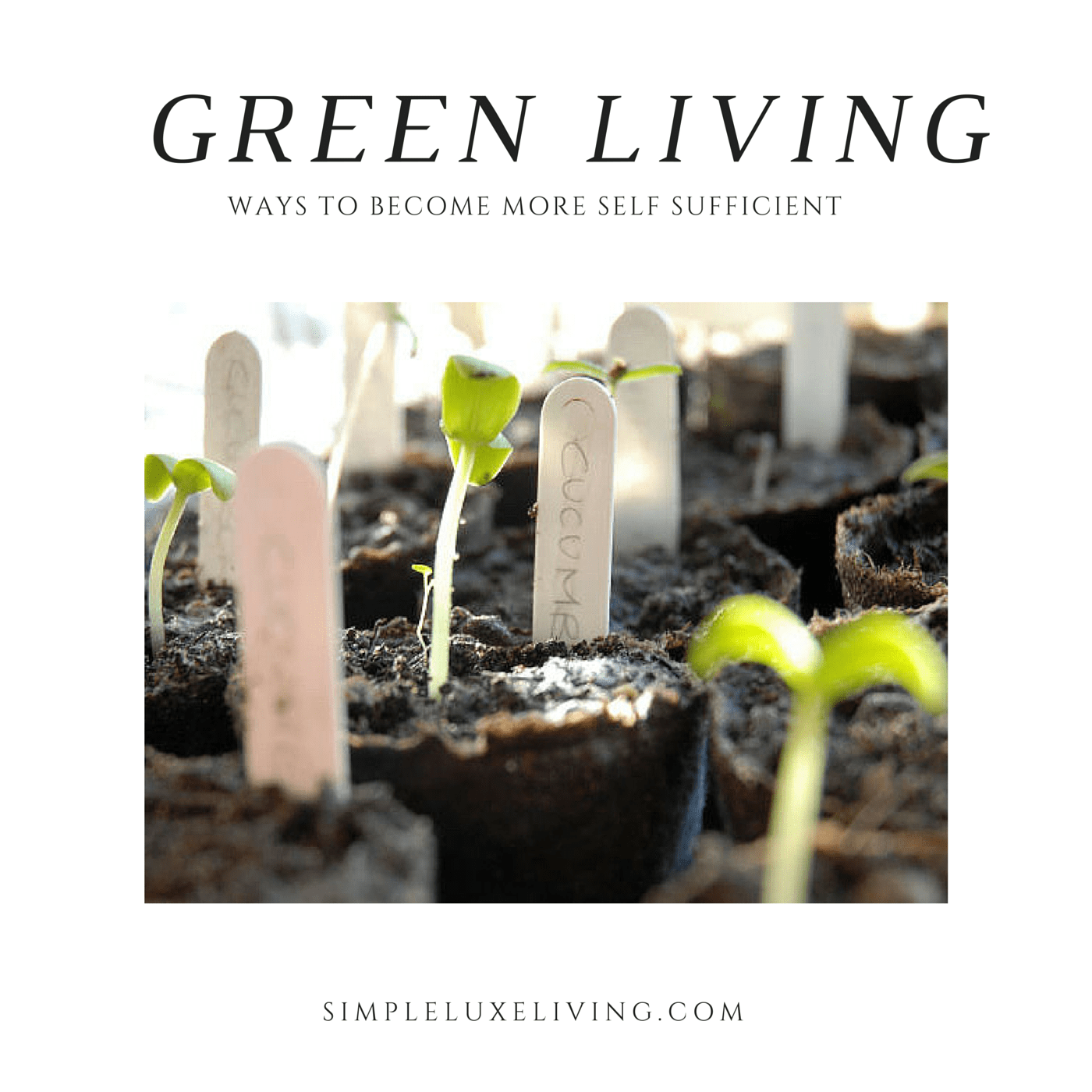 13 Ways To Live More Green