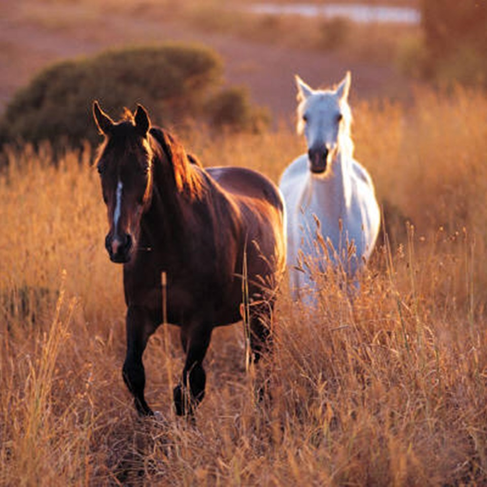 7 Life Lessons From A Horse