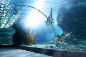 1388259902_aquarium