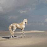 Akhal Teke Horses Are Most Beautiful In The World Simplemost