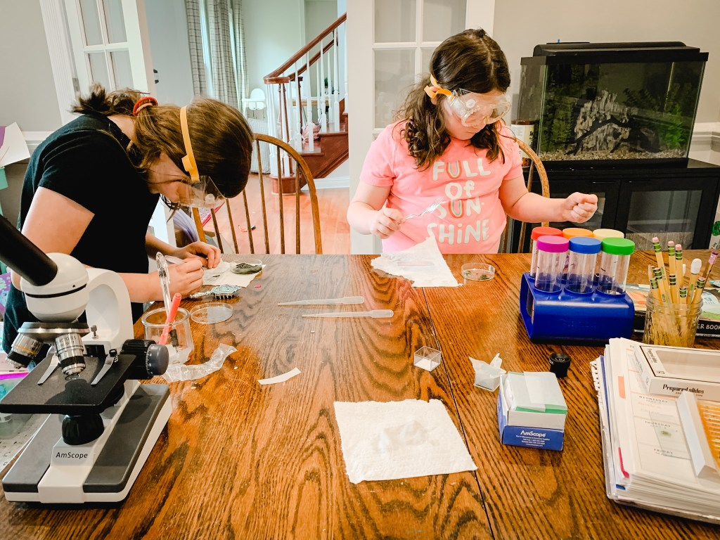 Homeschool Science Lesson, Our Daily Homeschool Rhythm with a Baby