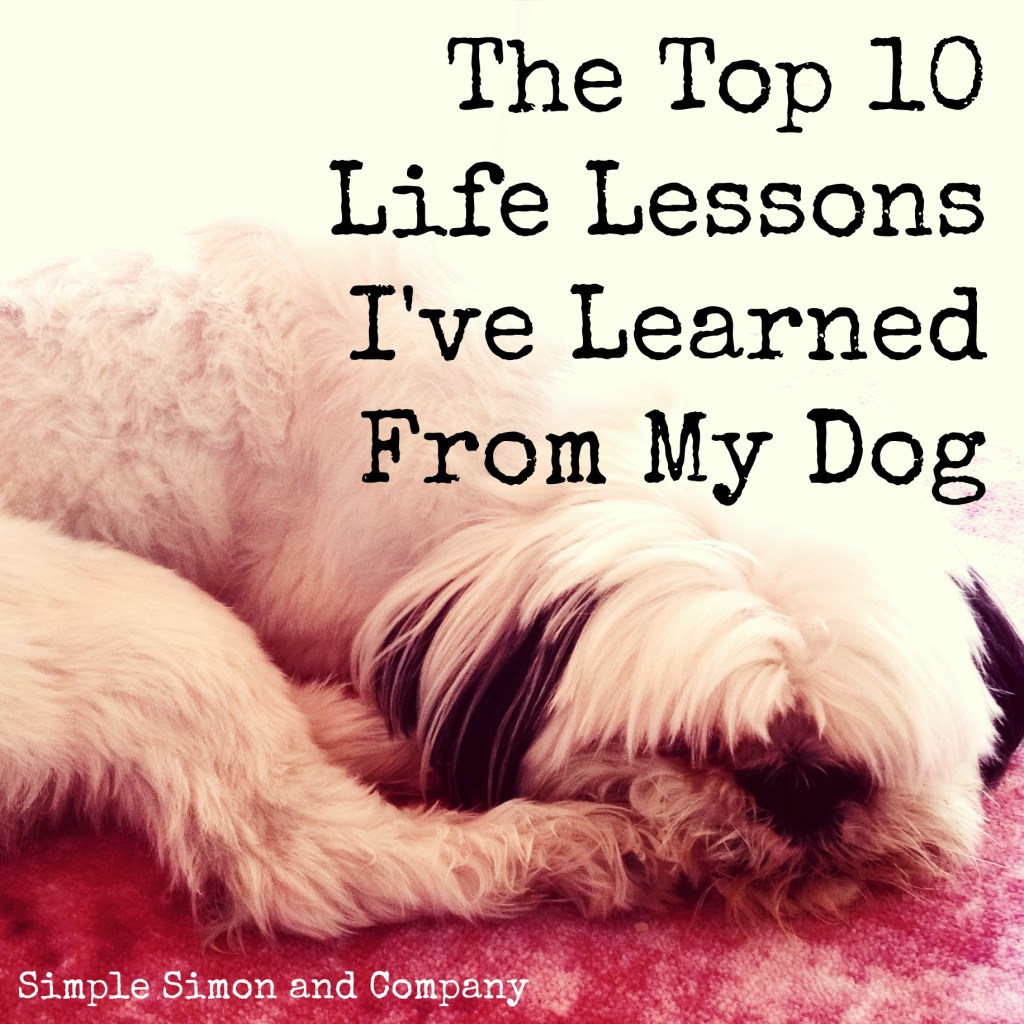 Top 10 Life Lessons I've Learned From My Dog