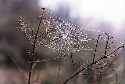 spiderweb between to sticks
