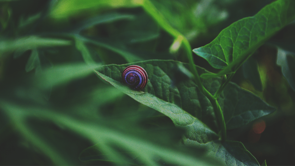 a snail indulging in slow living on a green leave