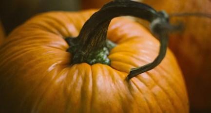Pumpkin Chai Scent