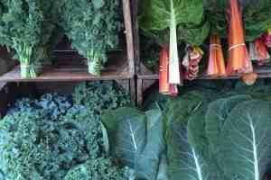 Why farmers go organic 58