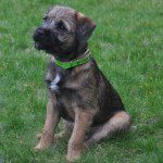 Puppy and beginners dog training