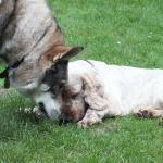 Dog training and positive reinforcement