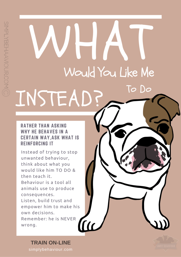 When Do We need To Intervene During Dog Play? - Simply Behaviour Dog