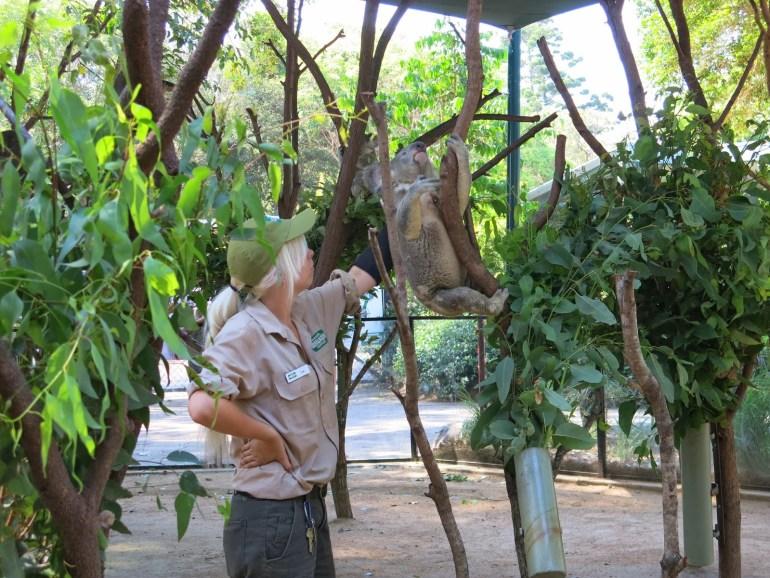 澳洲黃金海岸可倫賓動物園