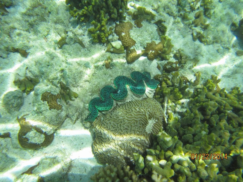 大堡礁兩天一夜自由行