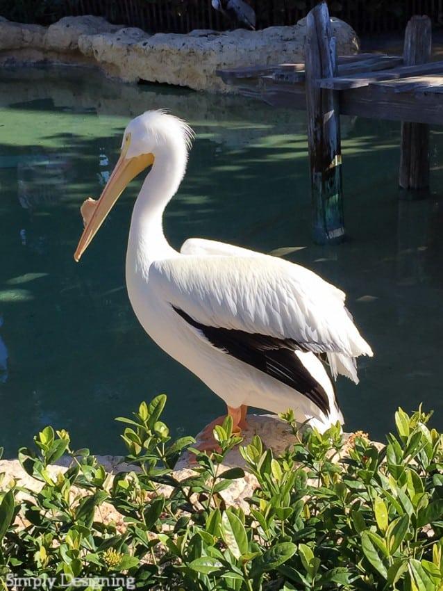 Pelican Preserve