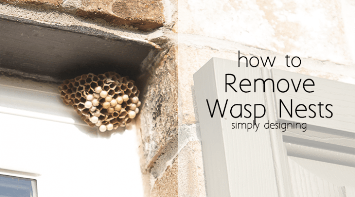 How to Remove Wasp Nests