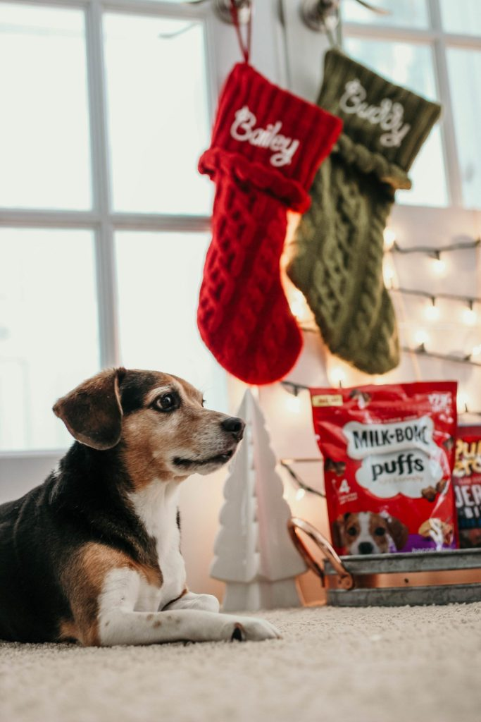 Simple Gift Ideas for Pets by Simply Every