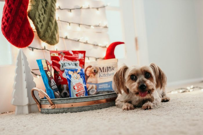 How do you celebrate the holidays with your pets?