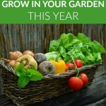 10 Things You Should Grow in Your Garden This Year