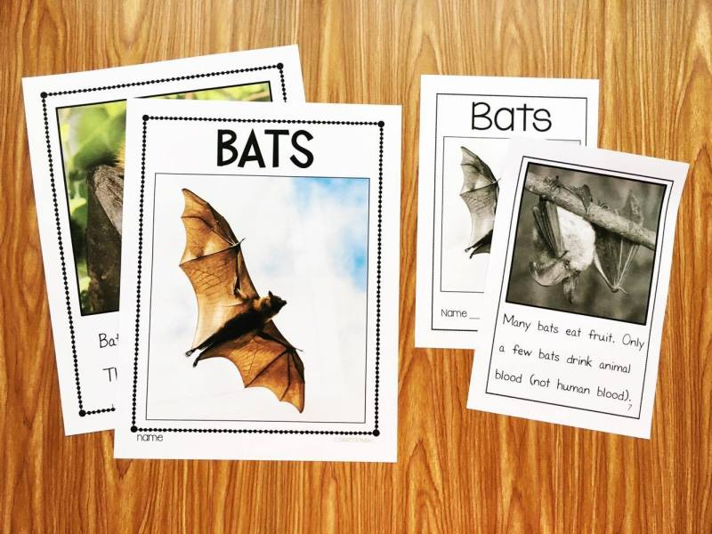 Bats Nonfiction Reader from Simply Kinder. This book uses real photos and easy text for the kids to understand. Perfect for preschool, kindergarten, and first grade.