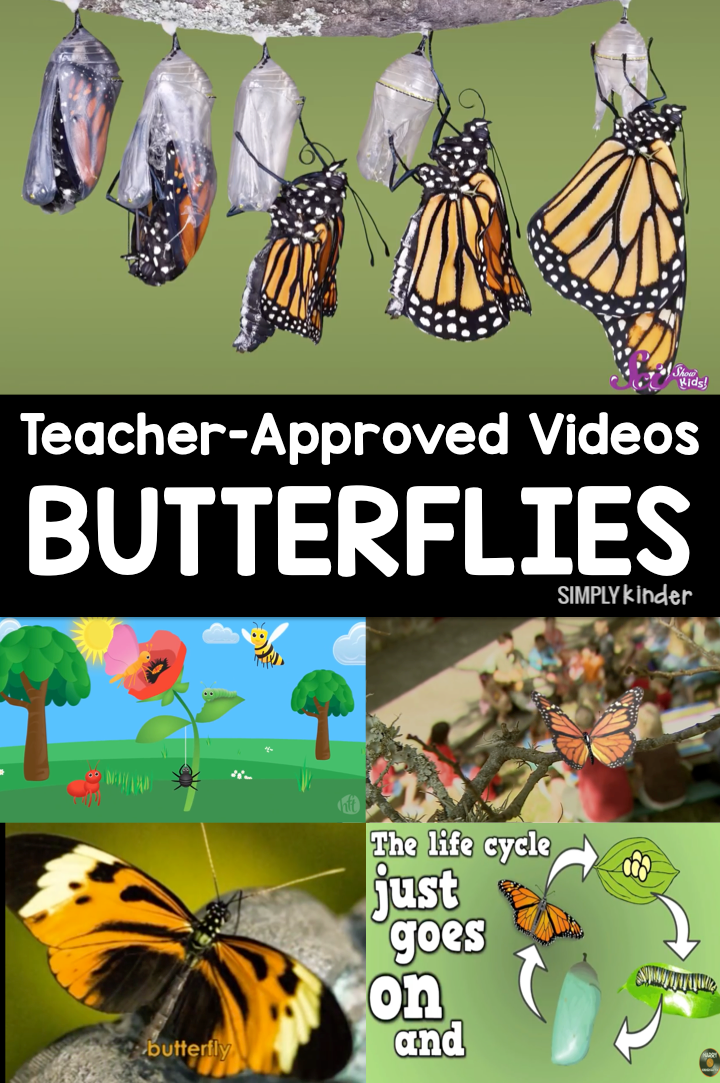 Butterfly Life Cycle Videos for kids. We previewed these videos and they are appropriate for preschool, kindergarten, and first grade students. Learn about how a caterpillar becomes a butterfly, see real pictures of the process, and have lots of fun!
