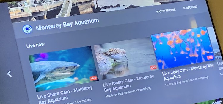 Live videos listed under the Monterey Bay Aquarium channel on the Apple TV YouTube app.