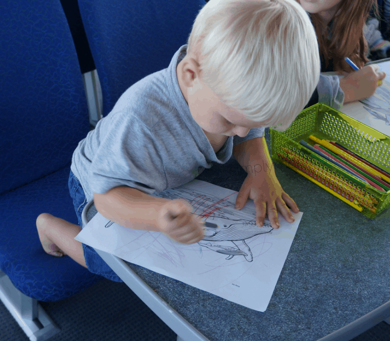 Whale Watching with a Toddler - Colouring on board the Prince Rupert Adventure Tours