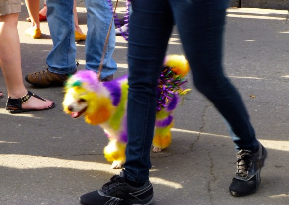 Dressed Up Dog,French Quarter, Louisiana
