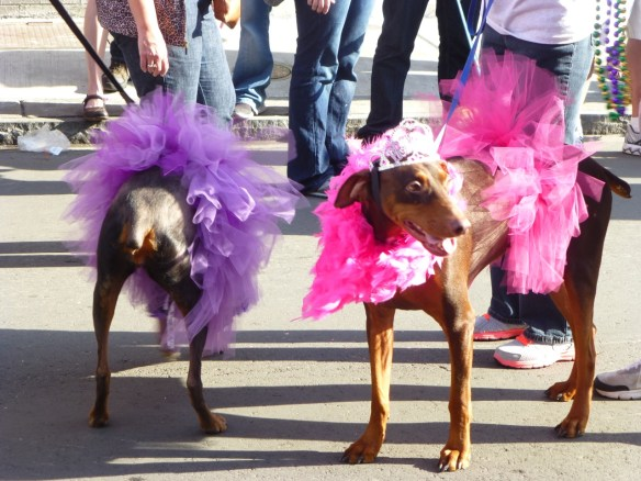 Dressed Up Dogs, French Quarter, Louisiana