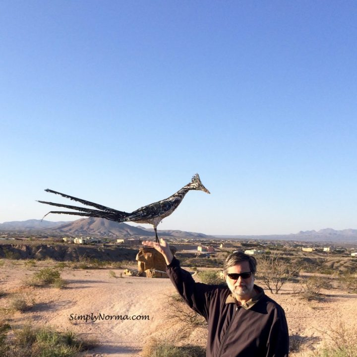 New Mexico Roadrunner