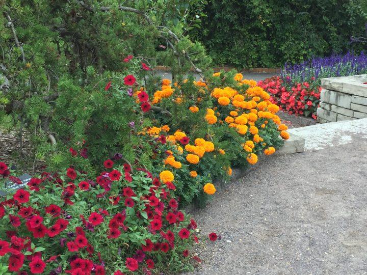 Autumn Flowers, Minnesota Landscape Arboretum