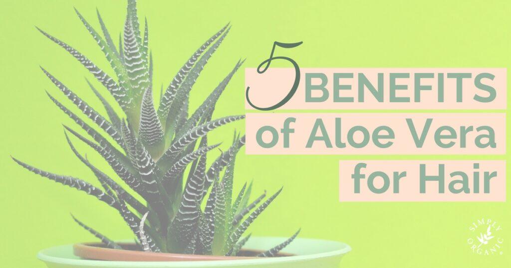 5 Benefits Of Aloe Vera For Hair Simply Organic Beauty