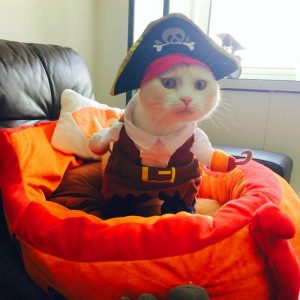 Simply Pets Review of Idepet Pirate Costume for Dogs and Cats highly recommends this pet costume.