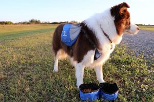 Simply Pets Review 2018 of the Outdoor Dog Backpack Harness as a sturdy, innovative option for outdoor activities with your dog