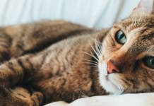Best CBD Oil for Cats